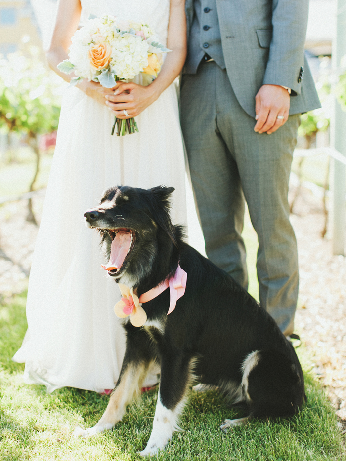 dog with bride and groom in Osoyoos, British Columbia
